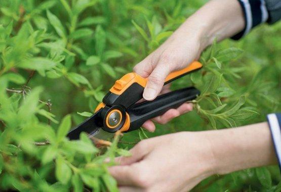 Beskær grene og buske