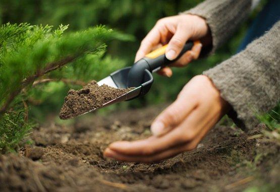 Kun det bedste er godt nok til dine nye planter
